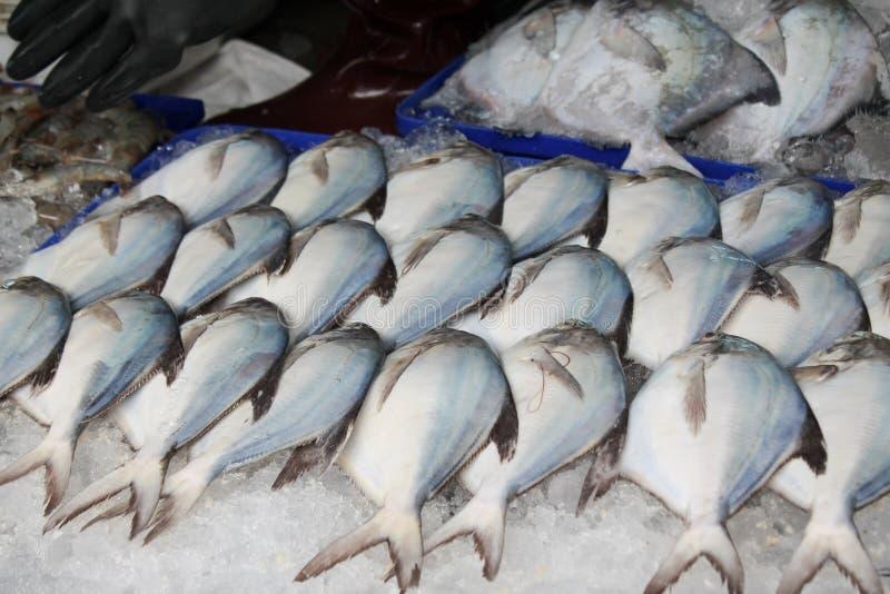 Ryba na lodzie fotografia royalty free