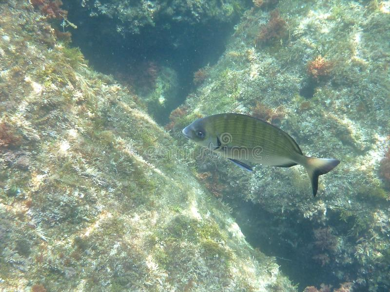 Ryba nad skałami zdjęcia stock