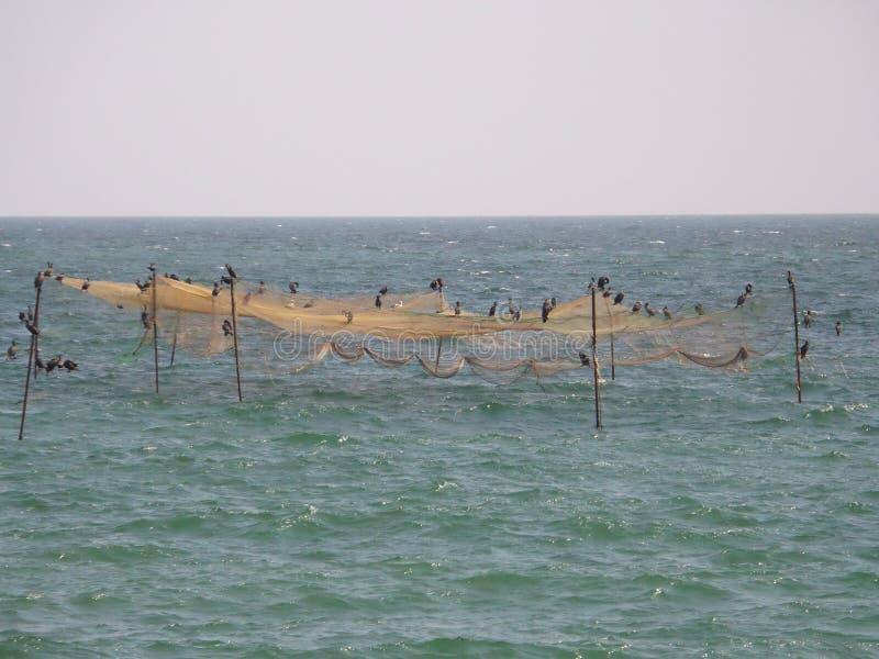 Ryba oklepowie obraz stock