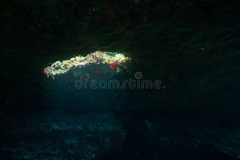 Ryba pływa blisko otwarcia fotografia stock