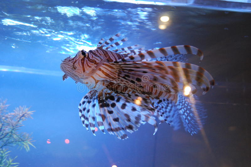 Ryba przy akwarium zdjęcia royalty free