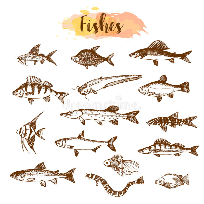Ryba typ i rodzaje Ręki rysować wektorowe ilustracje Jezioro ryba w kreskowej sztuki stylu Wektorowe morza i oceanu istoty dla ilustracji