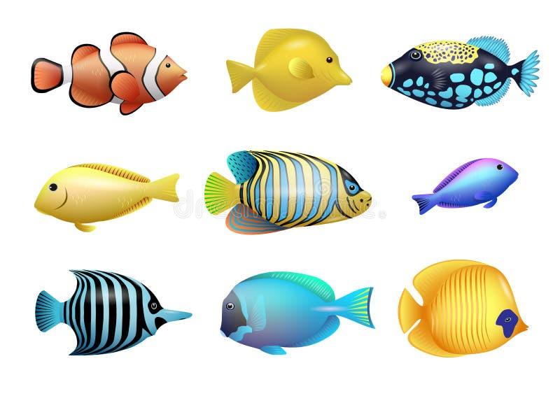 ryba ustawiają tropikalnego royalty ilustracja