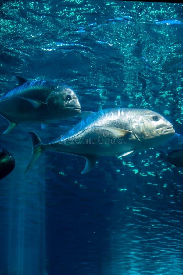 Ryba W świetle 7 obrazy royalty free