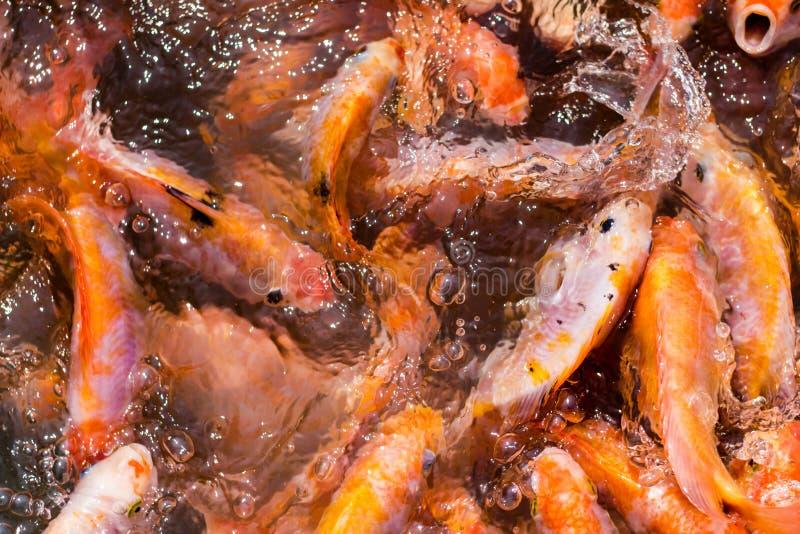 Download Ryba w dużo cienie obraz stock. Obraz złożonej z pomarańcze - 53777151