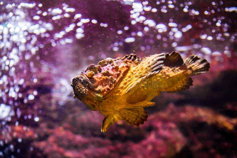 ryba z koralowymi i nadwodnymi zwierzętami zdjęcia stock