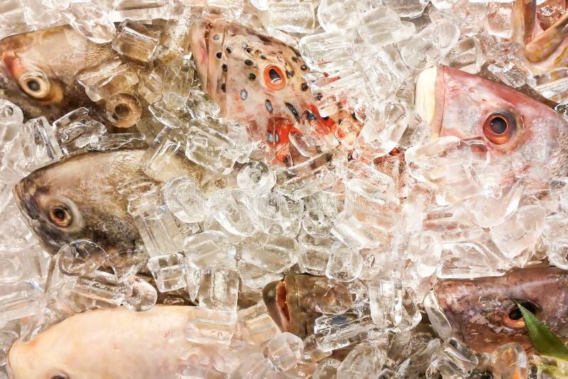 Ryba zakrywająca z lodem w rynku Jasnych oczy denote świeżość fotografia stock
