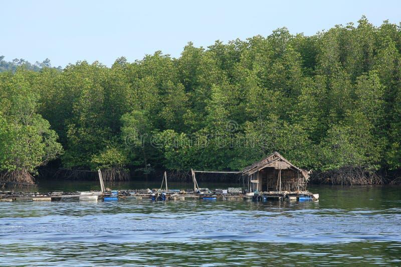 rybaków lasu domu namorzynowa pobliski tratwa drewniana fotografia stock