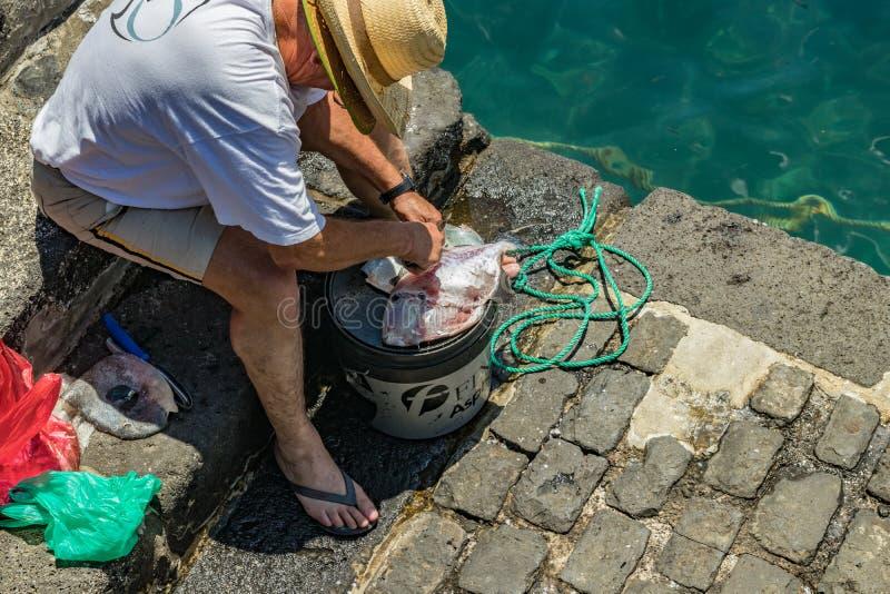 Rybak po pomyślnego połowu, używać nóż patroszyć świeżo złapanej ryby nad żywieniowy wiadro i czyścić, Delikatny grże obraz stock