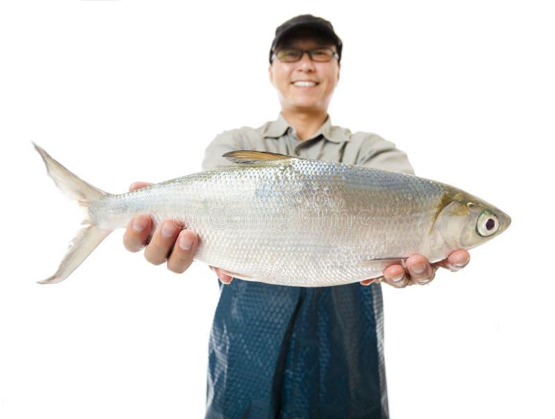 rybak pokazuje dużej milkfish ryba odizolowywającej na bielu zdjęcia stock