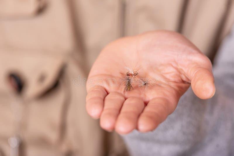 Rybak pokazuje połów komarnicy haczyka w ręki palmie zdjęcia royalty free