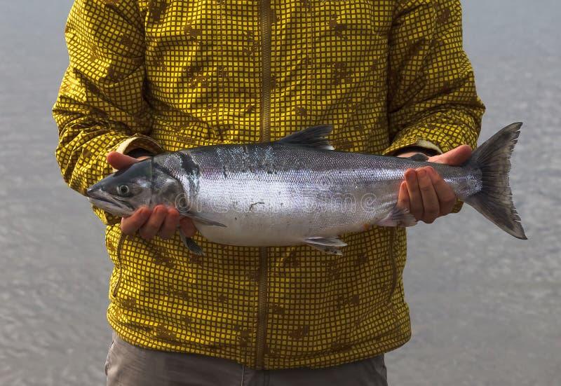 Rybak trzyma dużej Syberyjskiej łosoś ryba zdjęcia stock