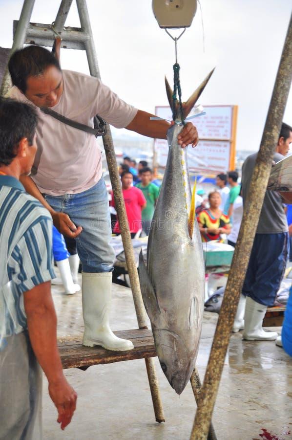 Rybak waży tuńczyka sprzedawać rynek zdjęcia royalty free