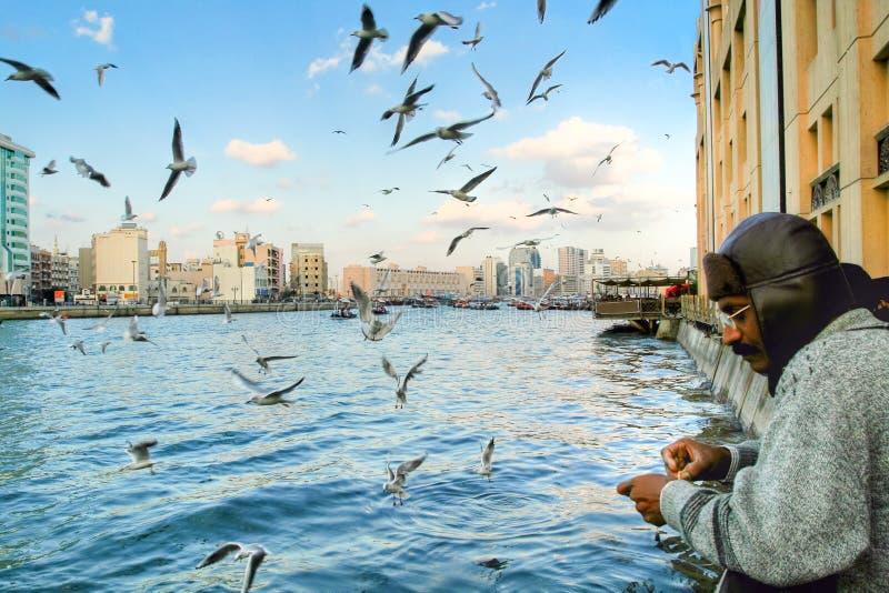 Rybaka połów w Dubai, UAE, przy Grudniem obrazy royalty free