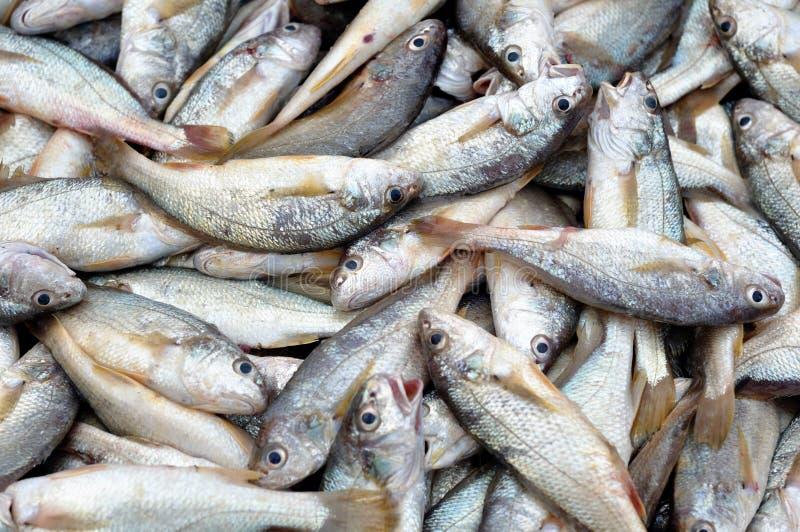 Download Rybi świeży obraz stock. Obraz złożonej z ryba, tło, morze - 13341959