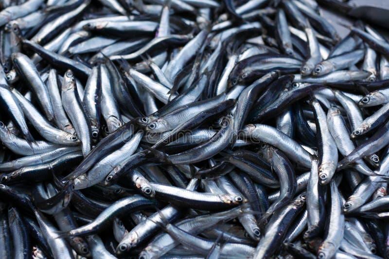 rybi świeży mały fotografia stock