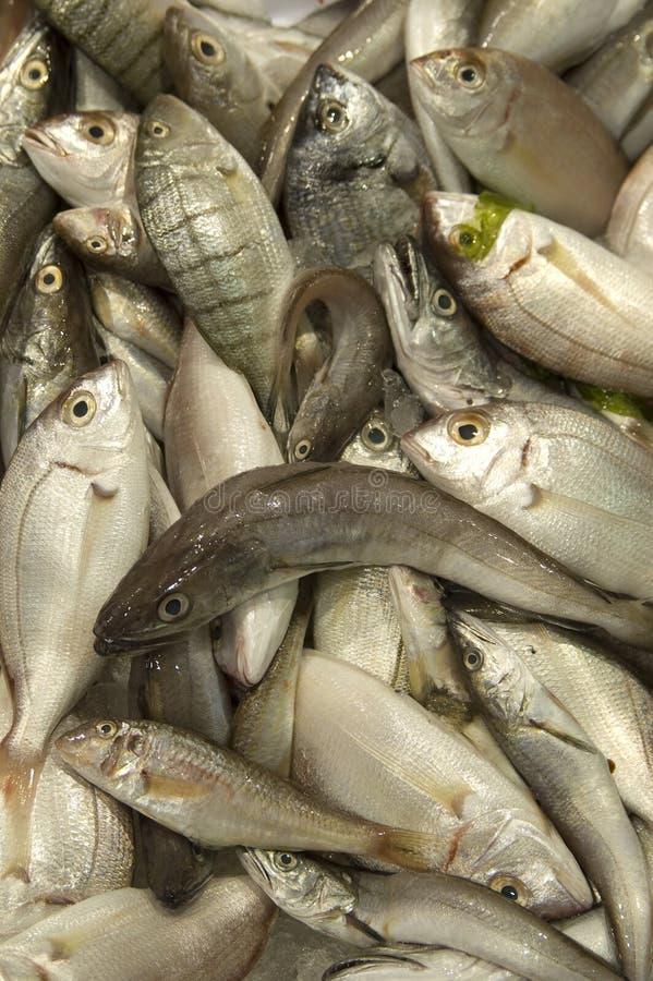 rybi świeży rynek fotografia royalty free