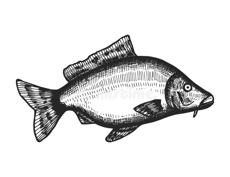 Rybi denny nakreślenie odosobniony zwierzęcy zwierzęcy podwodny czerń royalty ilustracja