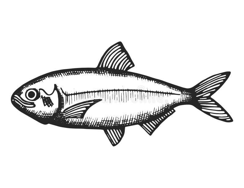Rybi denny nakreślenie odosobniony zwierzęcy zwierzęcy podwodny czerń ilustracja wektor