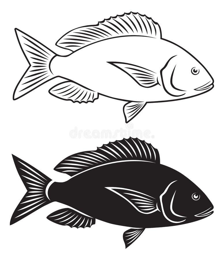 Rybi dentex royalty ilustracja