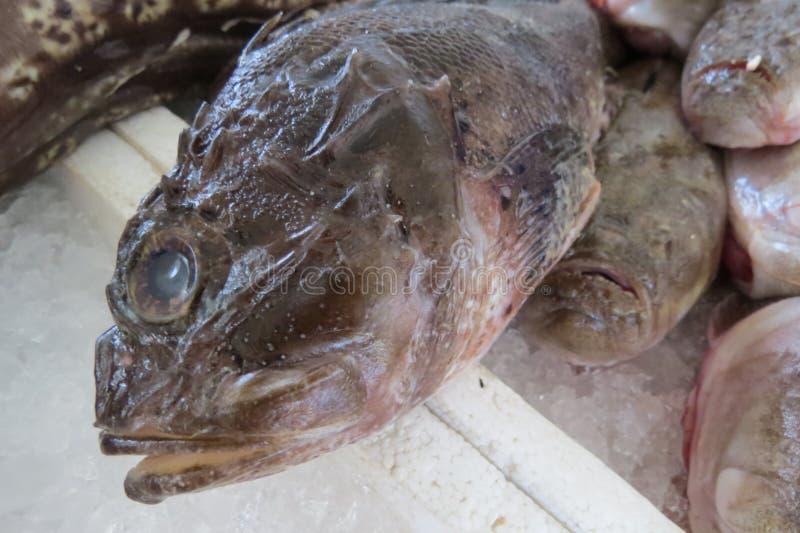 rybi egzota morze obrazy stock