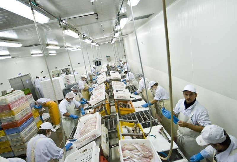 rybi fabryka przerób zdjęcie royalty free