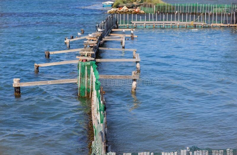 Rybi gospodarstwo rolne i seagull obrazy stock