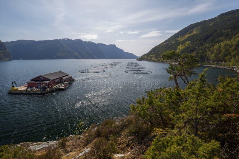 Rybi gospodarstwo rolne na fjord zdjęcia royalty free