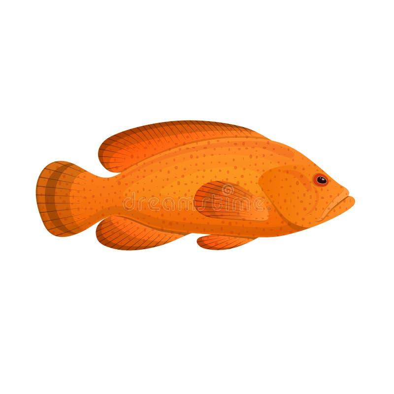 Rybi grouper dostrzegający Kolorowa denna ryba, pływa na dennym dnie royalty ilustracja