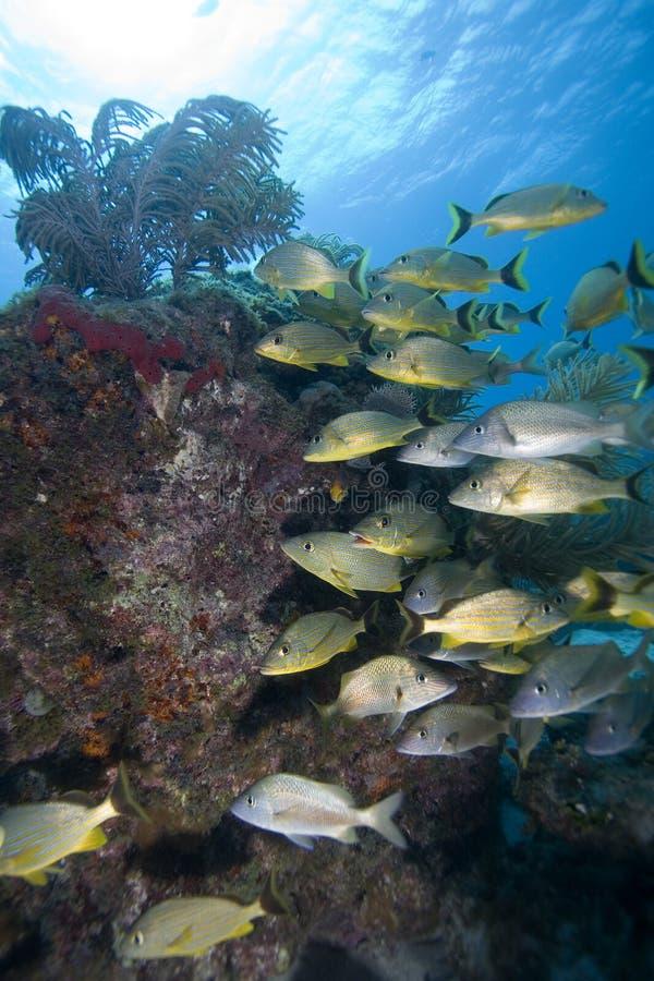rybi kluczowy target357_0_ largo tropikalny obraz stock