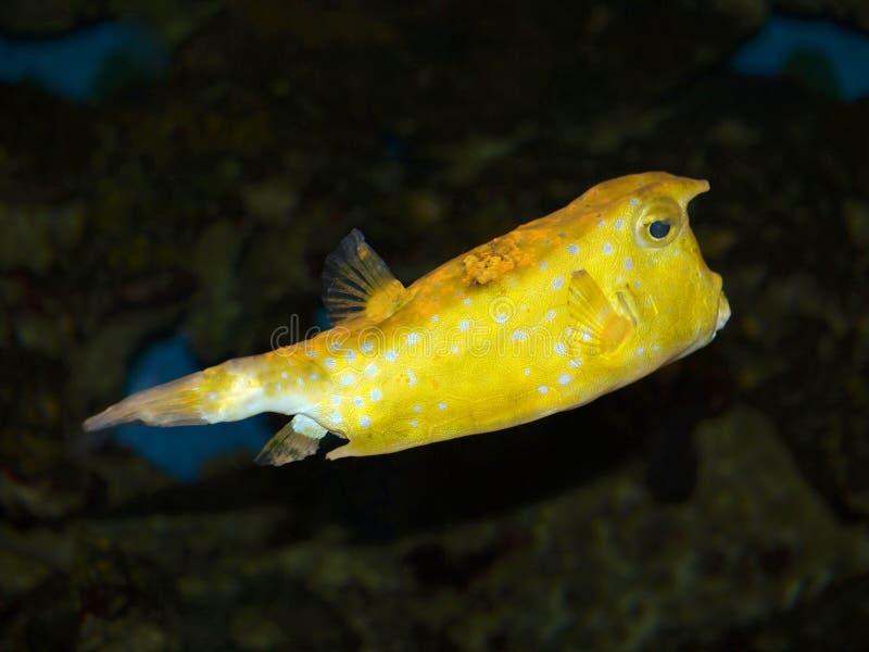 rybi kolor żółty obraz stock