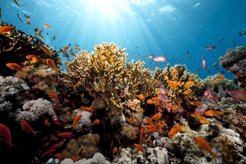 rybi korala ocean zdjęcia stock