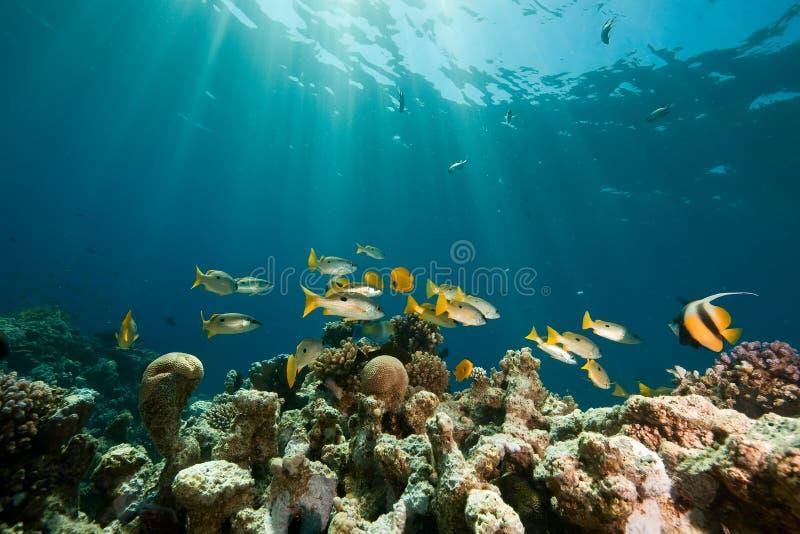 rybi korala ocean zdjęcie stock