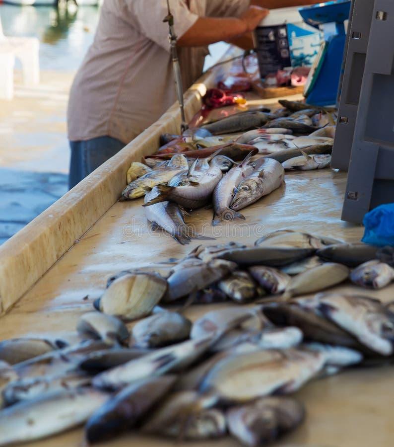 Rybi lying on the beach na stole mały rybi rynek zdjęcie stock