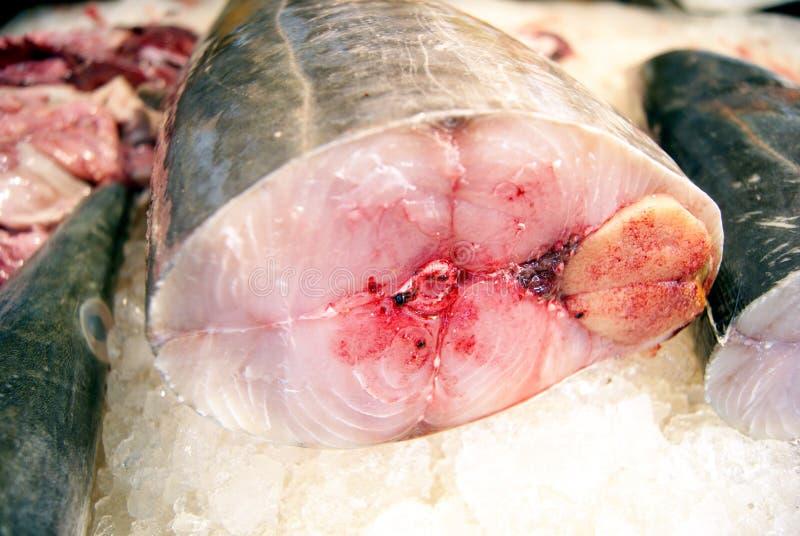rybi mięso zdjęcie stock