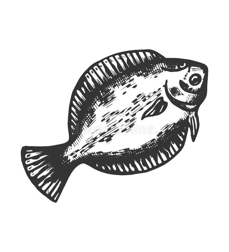 Rybi nakreślenie odizolowywający flądra przedmiota zwierzęcy czerń royalty ilustracja
