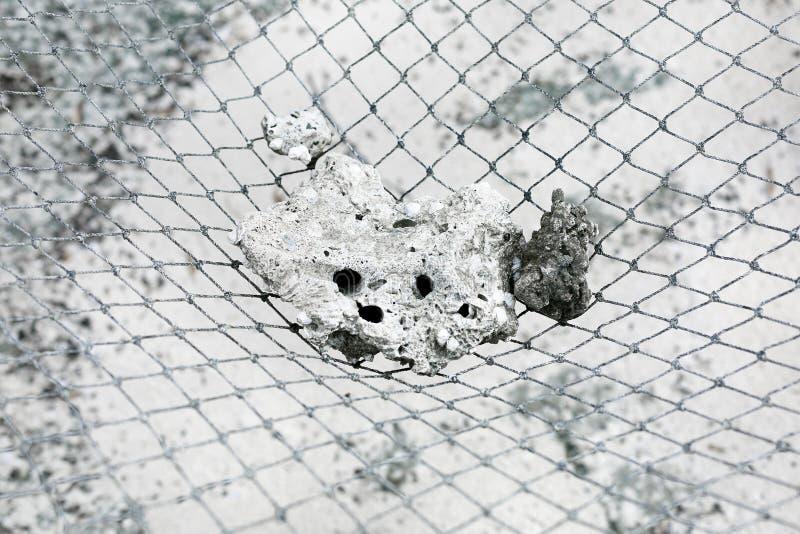 Rybi netto tekstury zakończenie up zdjęcie royalty free