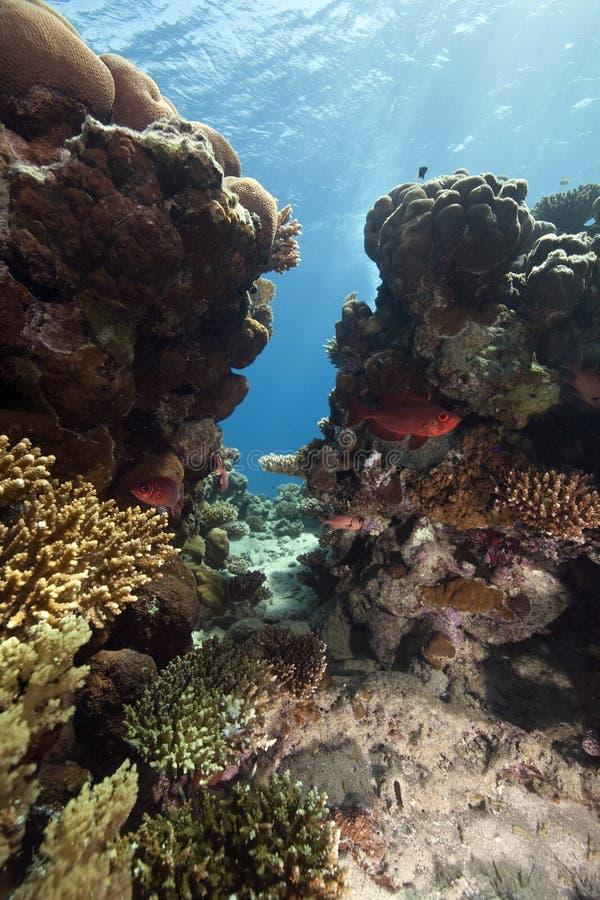 rybi ocean fotografia stock