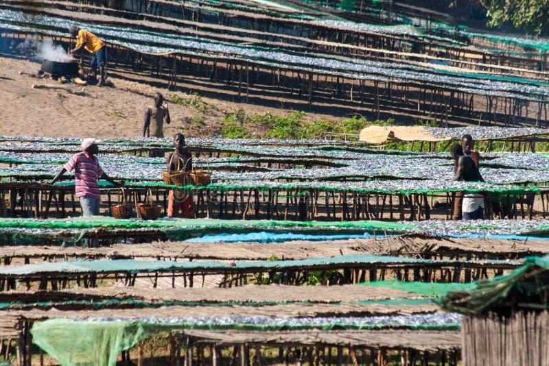 Rybi rynek w Malawi zdjęcie royalty free