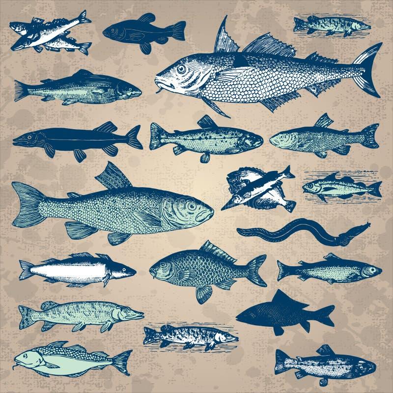 rybi setu wektoru rocznik royalty ilustracja