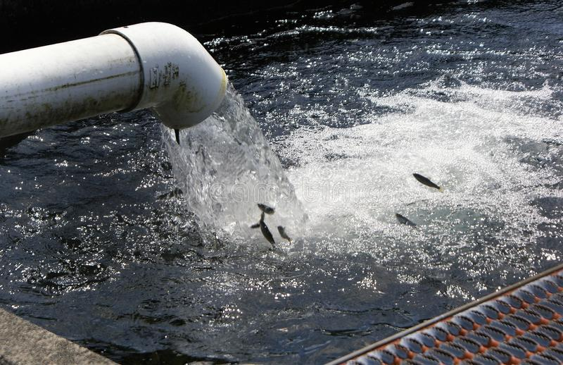 Rybi spadek od wodnego przybycia z drymby zdjęcie stock