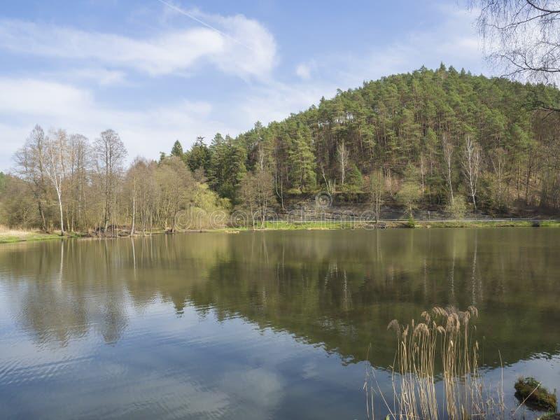 Rybi staw z świerkowym drzewnym wzgórzem i trawą, droga, brzozy drzewo i zdjęcie royalty free