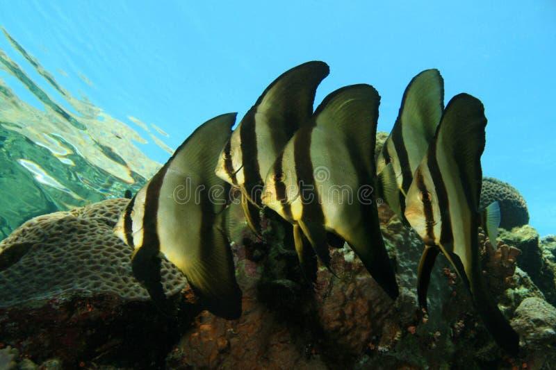 rybi szkolny tropikalny zdjęcie stock