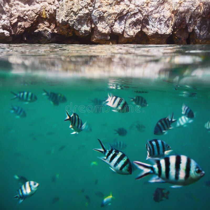 Rybi tłum w tropikalnym oceanie i skały splitted waterline zdjęcie stock