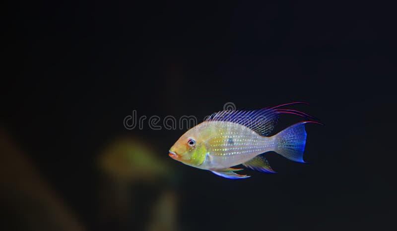 rybi tropikalny zdjęcia stock