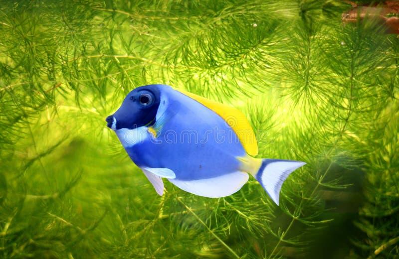 rybi tropikalny obraz stock