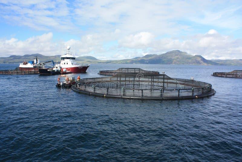 Rybi Uprawiać ziemię z zachodniego wybrzeża Szkocja obraz royalty free