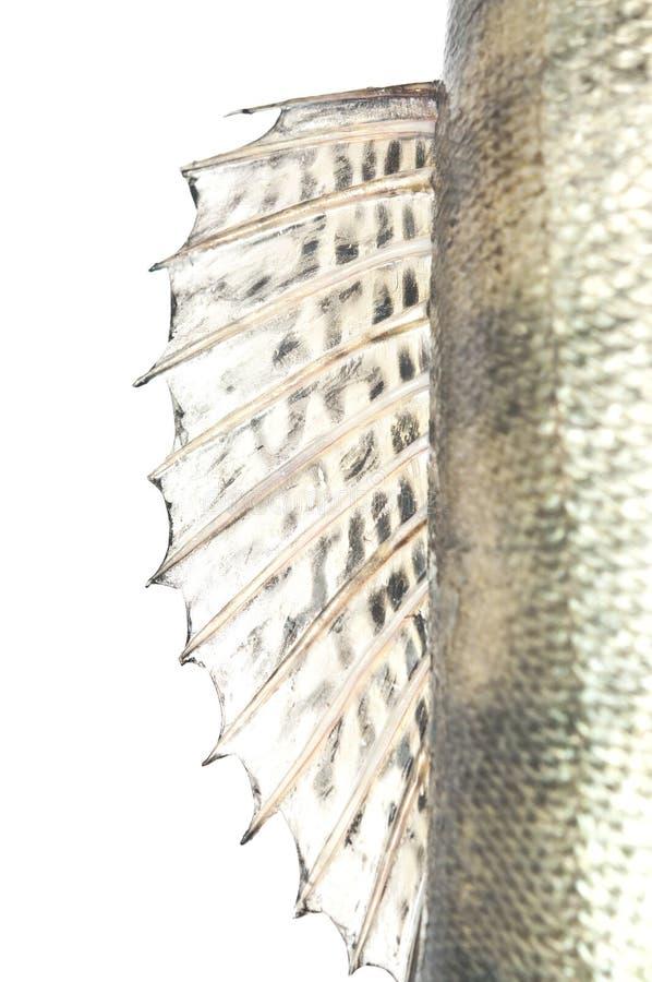 Rybi waży grunge teksturę obrazy royalty free