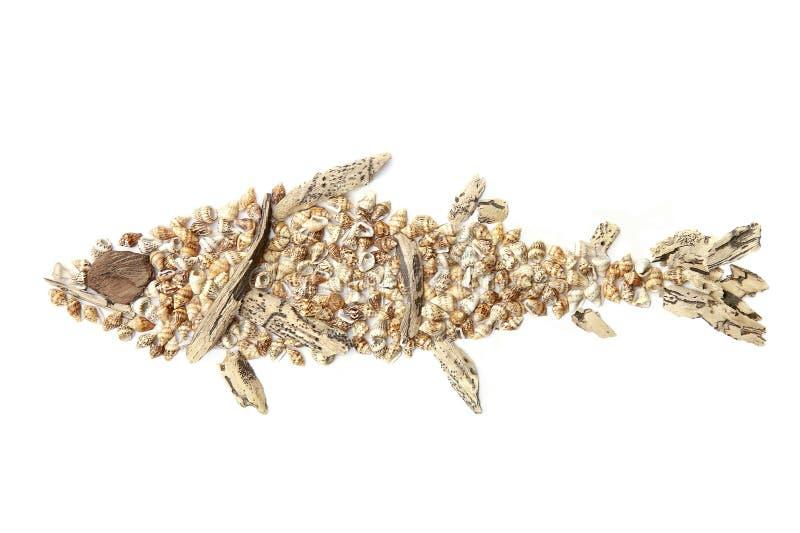 Rybi wizerunek tworzący morze skorupy odizolowywający na białym tle driftwood i zdjęcie royalty free