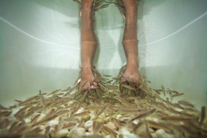 Download Rybi Zdroju Pedicure'u Traktowanie Zdjęcie Stock - Obraz złożonej z ludzie, ryba: 28957000